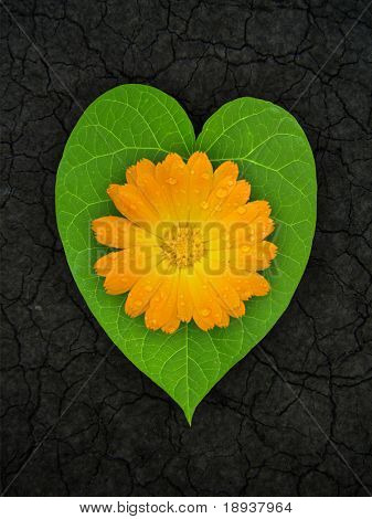 heart shaped leaf on cracked soil