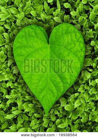 Heart shaped leaf on green background