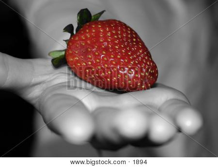 Berry In Hand