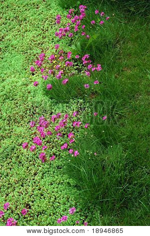 brightly colored blooming flower bed at summer. portrait orientation.
