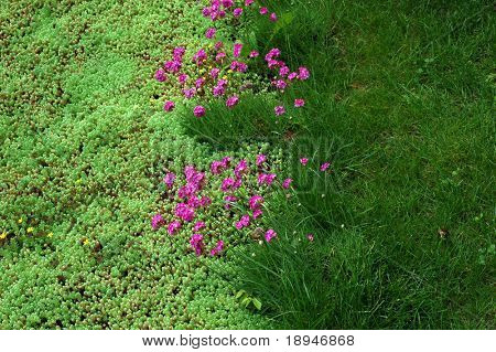 brightly colored blooming flower bed at summer
