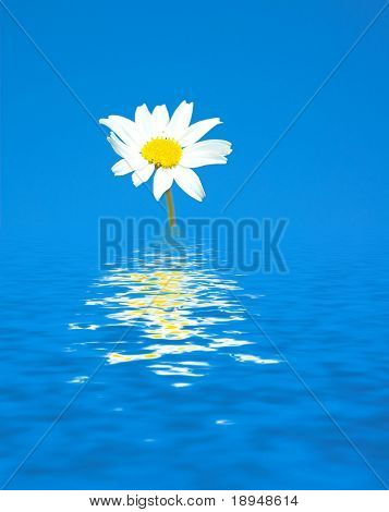 Tiny spring flower reflects in water