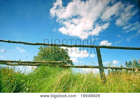 Rural scene with tree and fence