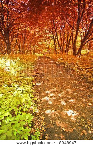 Colourful old autumn forest