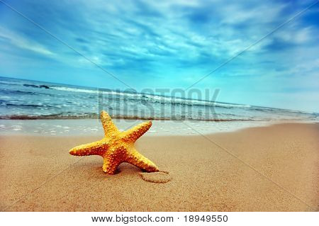 Estrella de mar en la playa - ideal para uso de la Web-