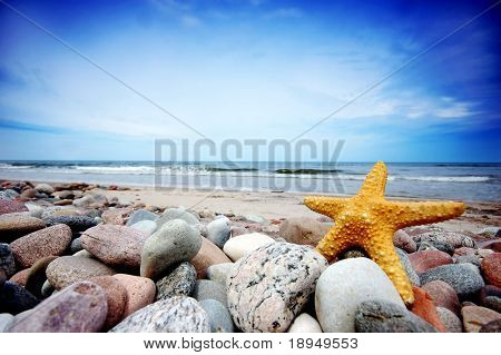Starfish on the tropical beach