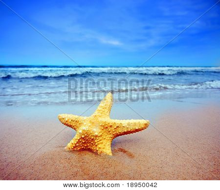 Starfish on a beach. Colorful, summer background