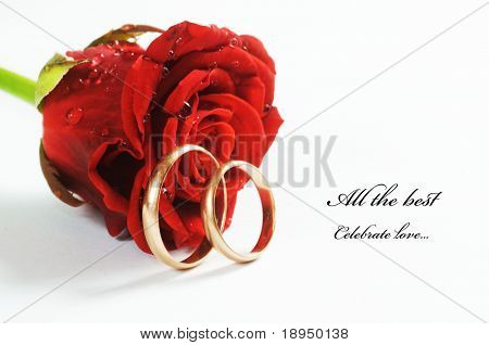Red fresh rose and gold wedding rings on white background. Space for your text