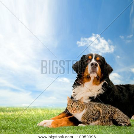 Dog and cat together on grass, sunny spring day and blue sky.