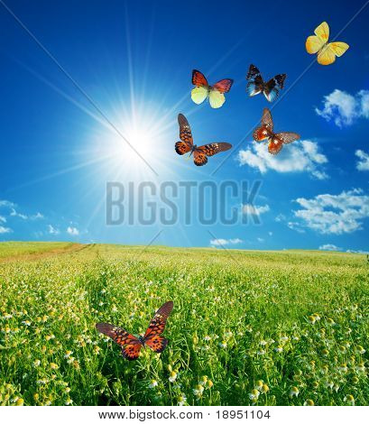 Butterfly spring field. A group o colorful butterflies in the spring summer grass land