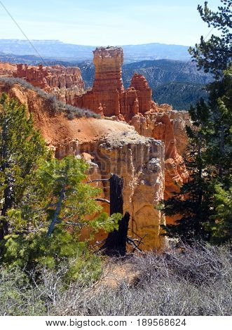 Red rock formations green pine trees and brush at 8800 feet in elevation Agua Canyon at Bryce Canyon National Park Utah.