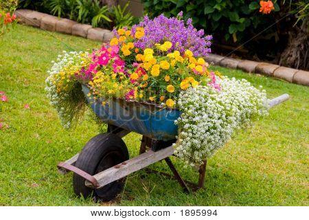 Wheelbarrel Flowers
