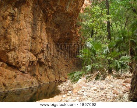 Kakadu Rock Palm