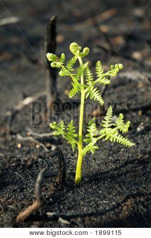 Pt_0005_Fire_Growth