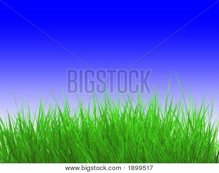 Grass Over Sky