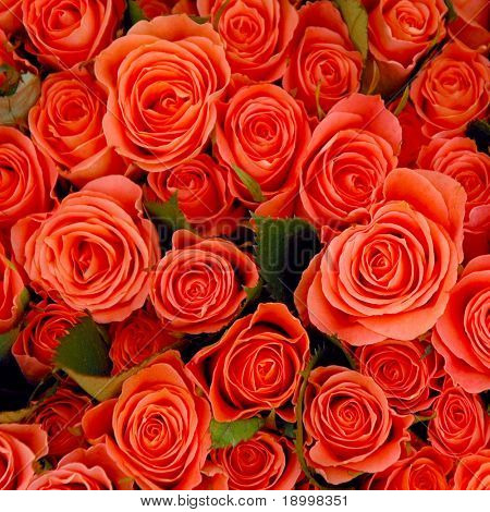 Bunch of rose roses.