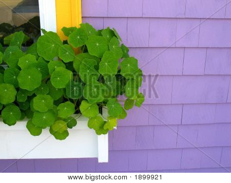 Purple House White Window Box