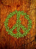 green plant peace symbol on old wooden background