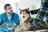 Vet in uniform making prescriptions for husky dog and talking to its owner poster