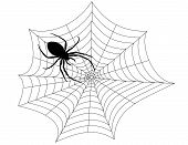 picture of spider web  - Computer generated illustration of a black spider weaving a web - JPG
