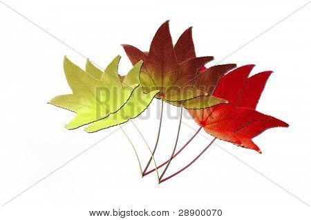 Rows of autumn leaves on white background