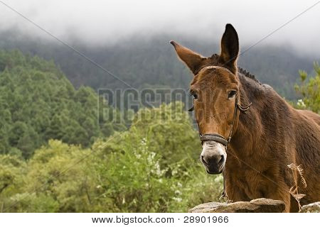 Portrait of a mule in a rainforest