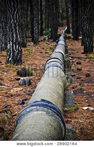 Hidden pipeline in the forest around Teide volcano.