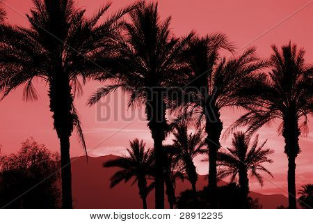 Palm Tree Red Hue Silhouette - Image taken in Palm Desert, California.