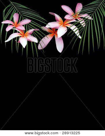 Symbols Of Travel To Hawaii - Plumerias and palm fronds over black with copy space at bottom.