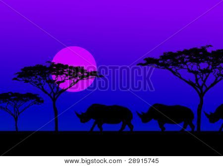 Midnight Migration - African Rhinos in Kenya walk in trail, silhouetted with Acacia trees in the background.