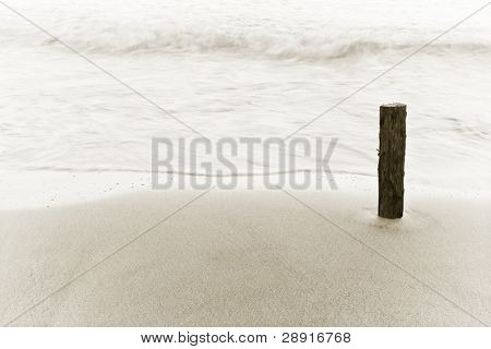 Beautiful nature abstract composition, tree trunk on seashore.