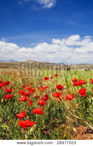 Colorful meadow under blue spring sky.