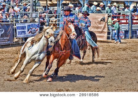 LAKESIDE, CALIFORNIA - APRIL 24: A cowboy herds a bucking bronco at a yearly rodeo event on April 24, 2010 in Lakeside, California.