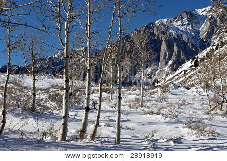 Wintry Scenic of snow, trees, and the majestic peaks near Convict Lake, Mammoth, California