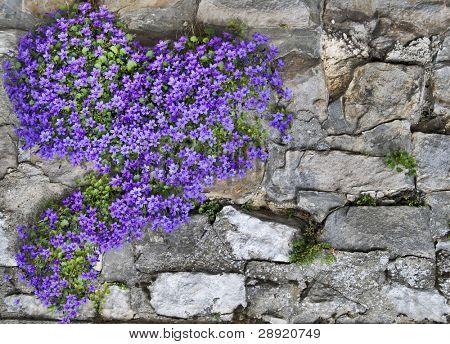 Blue flowers grow on wall