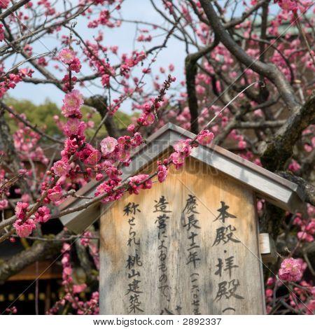 Kyoto Plum Blossoms