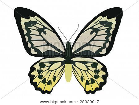 yellow butterfly on white background, black color