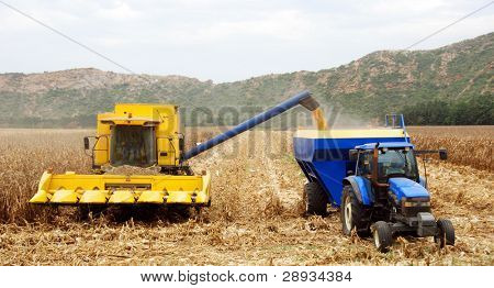 Combine harvesting maize