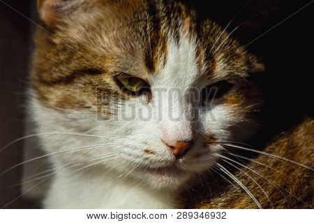 poster of Portrait Of A Street Cat. Stray Cats. Sad Animal Bold Eyes. Eyes Full Of Sadness And Grief. Wool, Ca