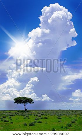 Single tree on the horizon with sun and heavy thunder cloud in the background