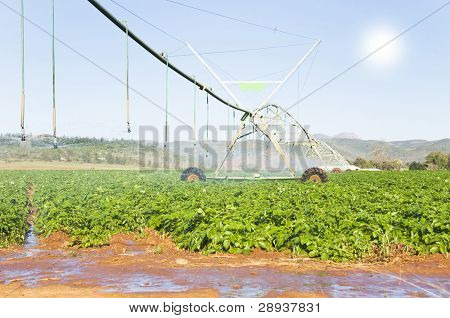 a Modern irrigation system watering a potato field on a farm