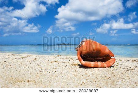 Tropical island beach with a beautiful sea shell