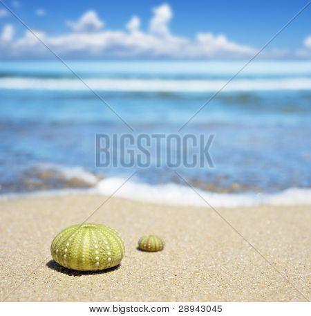 Beach scene with two dead sea urchin shells