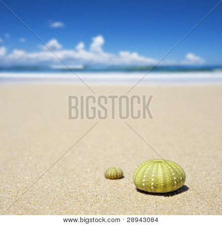 Beach scene with two dead sea urchin shells