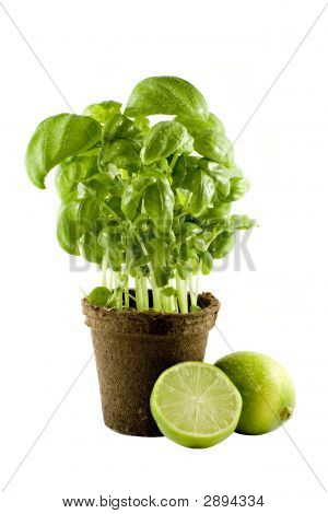 Basil Plant & Lime Isolated On White Background