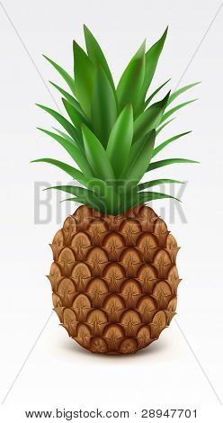 Illustration of fresh pineapple