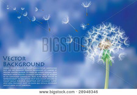 Leão de vetor com sementes que voam no céu nublado