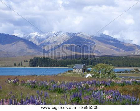 Church And Lupins, New Zealand