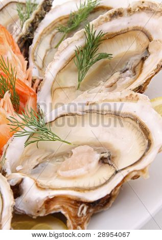 plate of oyster and shrimp
