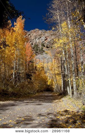 Autumn Aspens Mountain Lane